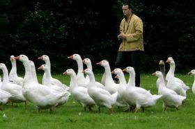 The Goose Whisperer