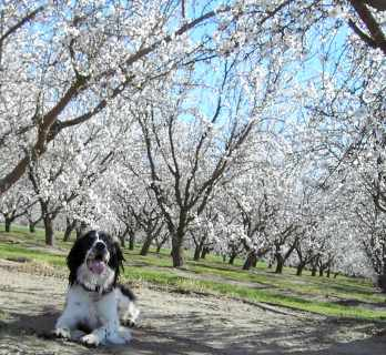 Lucky in the Orchard