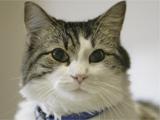 Oscar, the death-detecting hospice cat
