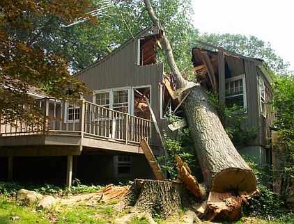 Tree falls through house by mistake