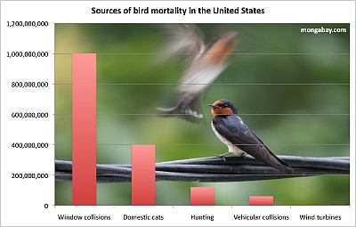 How birds die in the USA