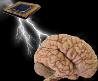 bioanalytical brain chip