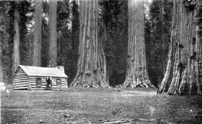 cabin under huge redwood trees