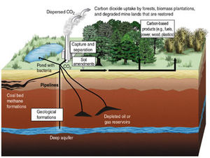 Graphic of carbon sequestration