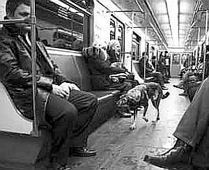 Somewhere between house pets and wolves, stray dogs ride Moscow subways.