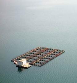 Ocean fish farm near Serbia