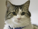 Oscar, the death-detecting hospice cat
