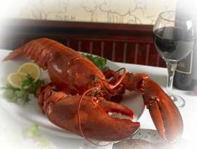 Lobster, big enough to harness our politicians