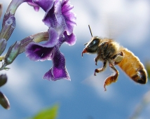 pollinating change