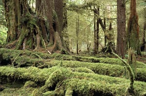 Rainforest of the Queen Charlotte Islands