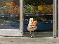Sam, the seagull shoplifter