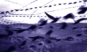 Glen Southworth's scan samples of bird flight