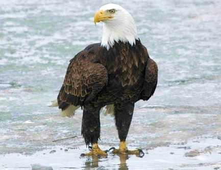 Tom's Eagle, Sante Fe