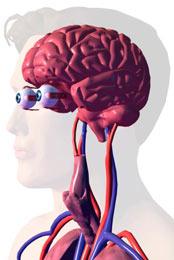 Speed of optic nerve